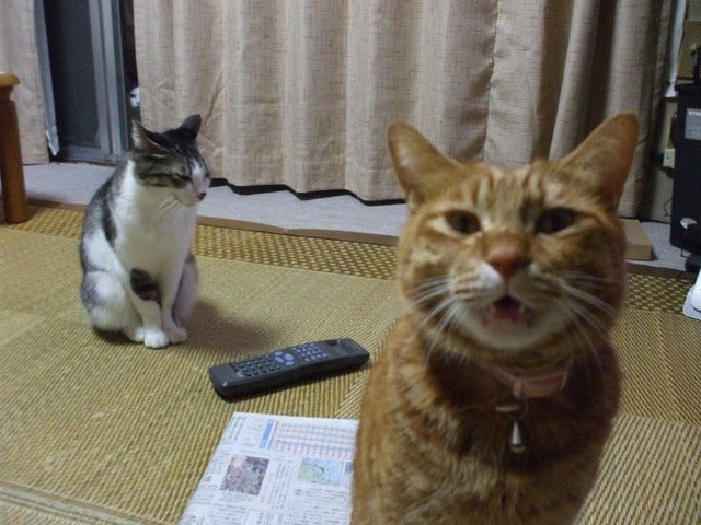 Japanese Photobombs Get Creepy and Spooky. Even with Cats.
