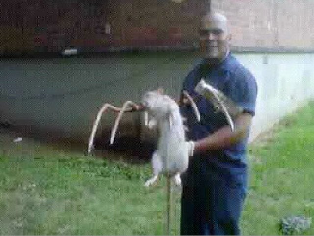 Photo Proof: Giant rat slain in Brooklyn, New York