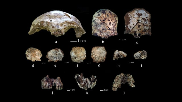 This skull pushes back human occupation of Southeast Asia and Australia by 20,000 years