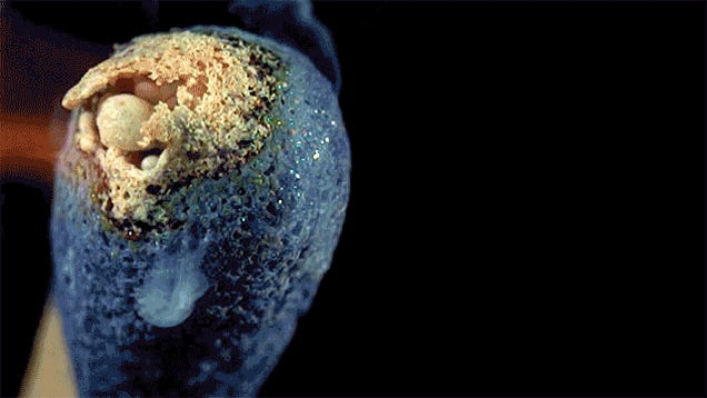 Match Heads Igniting at 4,000 FPS Look Like Dying Alien Worlds