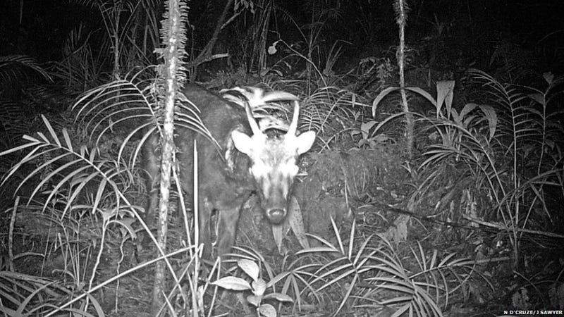 Two of the world's rarest mammals photographed for the very first time