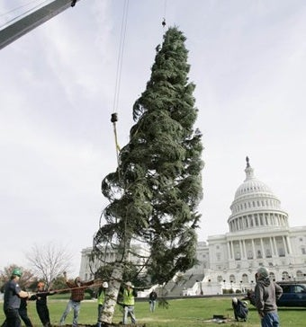 Capitol Xmas Tree Selected, May Require Secret Service Protection
