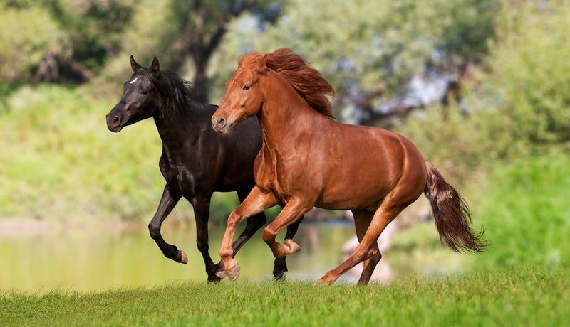 Iowa Slaughterhouse Not Allowed to Start Killing Horses Just Yet