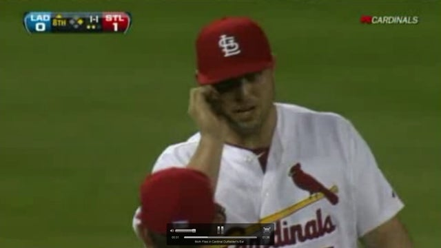 Moth Flies Into Ear of Cardinals Outfielder