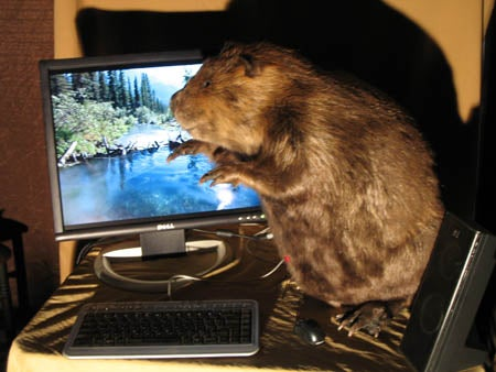 A Real Beaver Case Mod