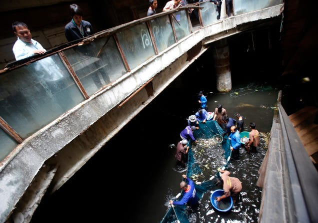 Thousands of Fish To Be Freed From Abandoned Mall Fish-Hell