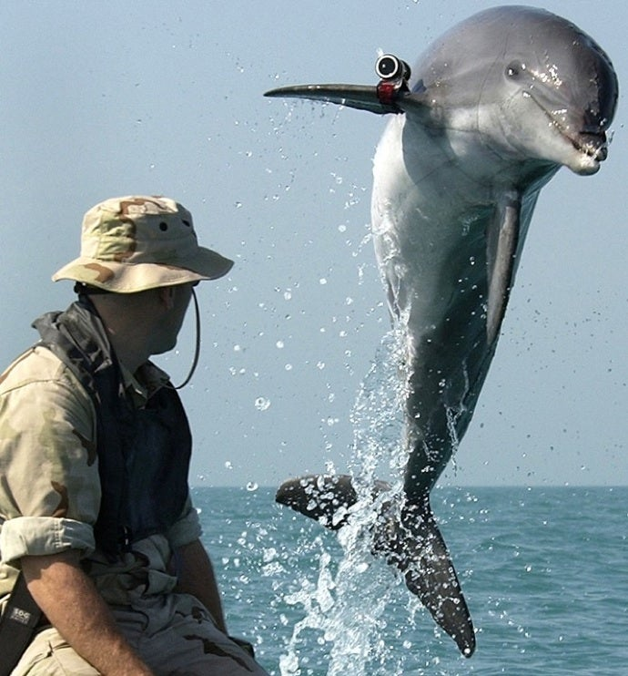 Those Job-Stealing Robots Are Going After the Navy's Mine-Hunting Dolphins