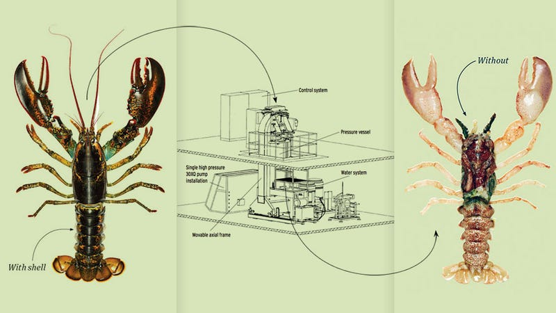 The Machine that Shucks Lobsters Alive