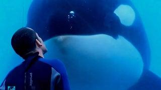 Court Has Upheld OSHA's Finding Against SeaWorld