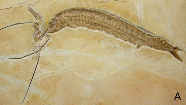 Most violent fossil ever shows the final record of a three-way hunt