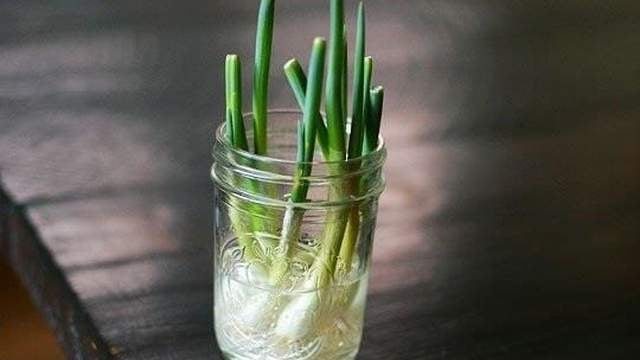Regrow Fresh Scallions in a Glass of Water