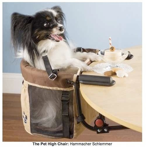 Give Your Pet A Seat At The Table