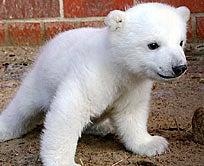 The Cute Polar Bear Cub Must Die