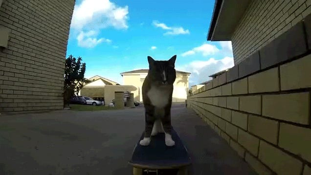 Watch a cat do some awesome skateboard tricks
