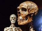 Did We Have Sex With Neanderthals Or Not?