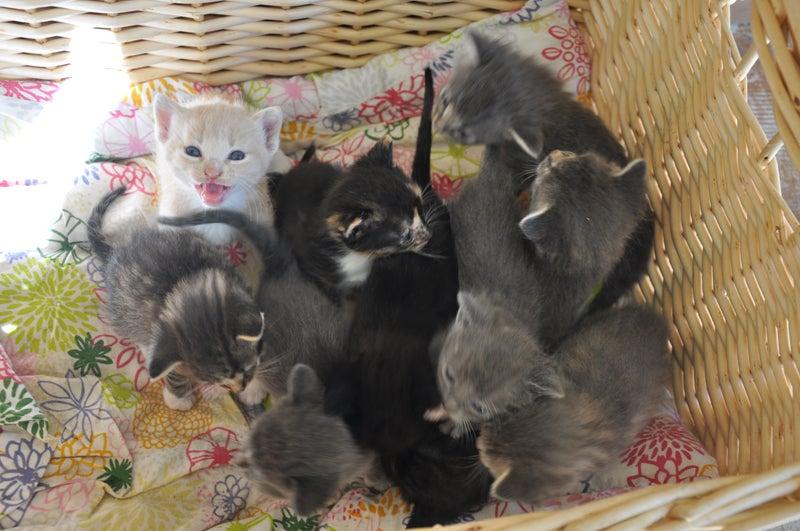 Team Cat...REPRESENT!