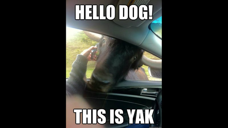 Hello Dog, This Is Yak