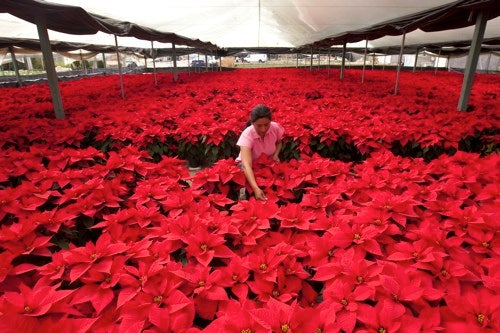 Holidays Awash In A Sea Of Red