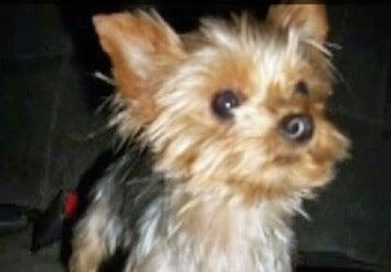 Burglar Steals Family's Christmas Gifts & Dog