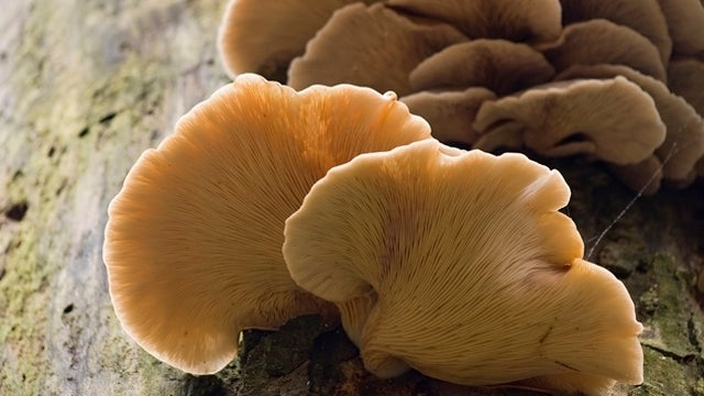 How Do I Tell If a Mushroom Is Safe to Eat?