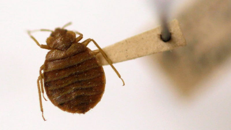 Mean Bed Bugs Are Determined to Ruin Your Vacation and Probably Your Whole Life