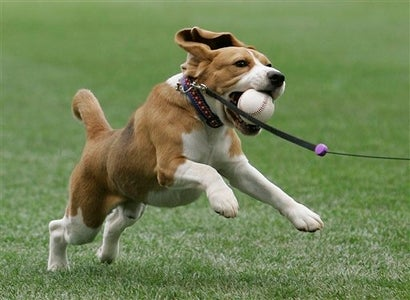 These Are Clapping Dogs, Rhythmic Dogs, First-Pitching Dogs, House Dogs, Street Dogs