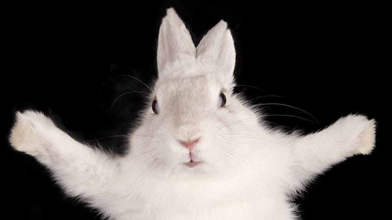 Hungry Monster Rabbits Are Destroying Cars Parked at the Denver International Airport