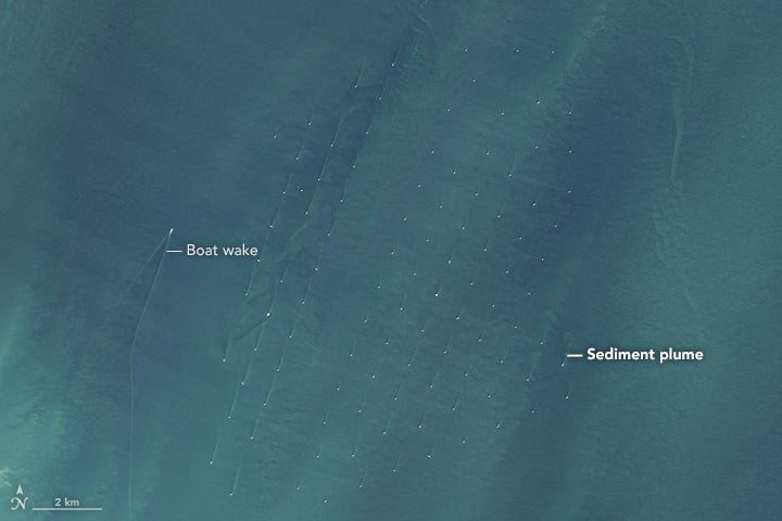 Satellite Captures a Surprising Impact of Offshore Wind Farms