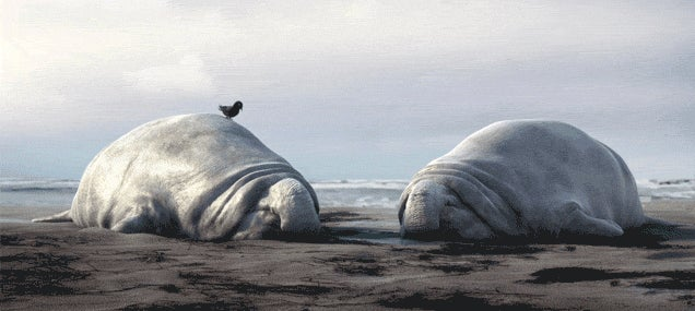 These two animated elephant seals basically explain life on a lazy day