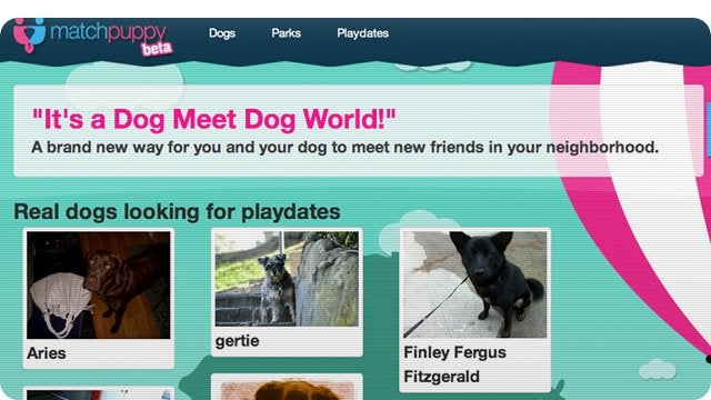 Puppy Social Networking Is Here to Rescue Lonely People