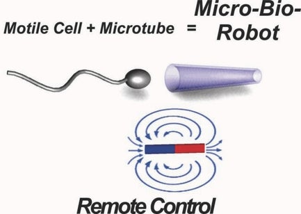Scientists have created remote controlled cyborg sperm