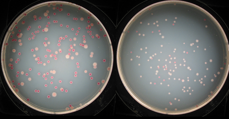 50,000 generations of bacteria prove that evolution never stops