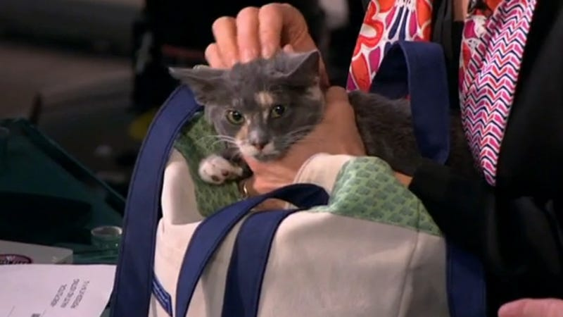 Uh, Mika Literally Pulled a Cat out of a Bag on Morning Joe Yesterday