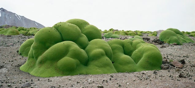 Meet the Woman Who Photographs the Oldest Living Things In The World