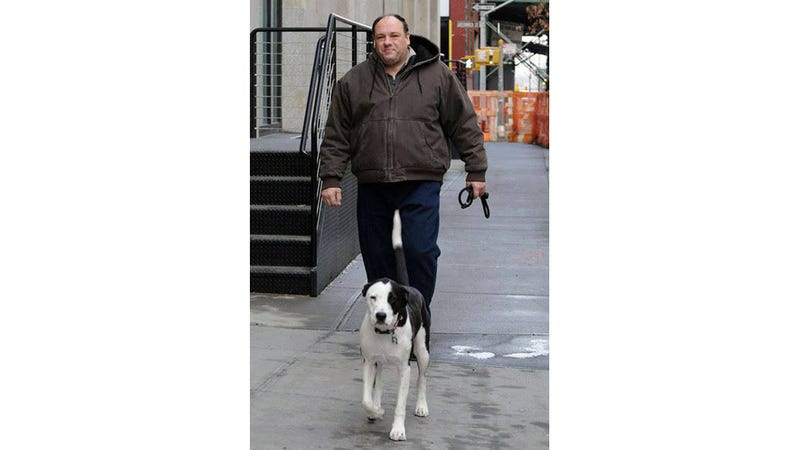 James Gandolfini Loved His Rescue Dog, and His Last Film Co-Stars a Pit