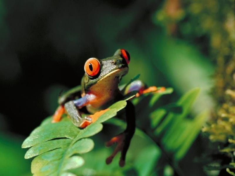 Frogs are dying in record numbers. Now you can help scientists study this problem.