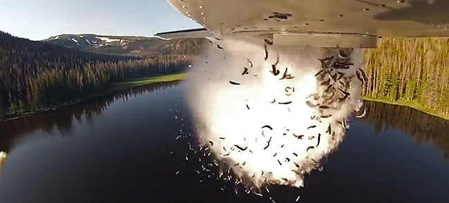 Holy Carp! Watch These Planes Bomb Lakes With Live Fish