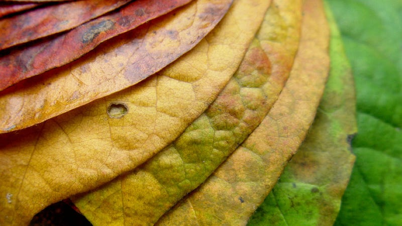 What makes leaves change color in the fall?