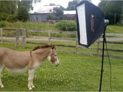 Susan Orlean Photographs a Nice Ass