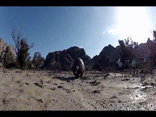 Pangolins Walk Just Like T. Rex