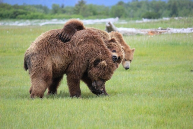 Please Enjoy This Gallery Of Amazing Bear Photos