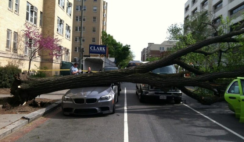 Tree Murders BMW M5 On Campus Of The George Washington University