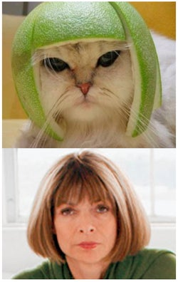 Limecat Wintour Not Interested In Details Of Ur Incompetence