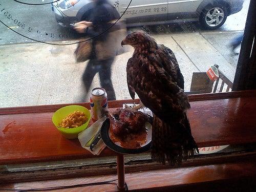 Marauding Hawks Terrorizing East Village Diners