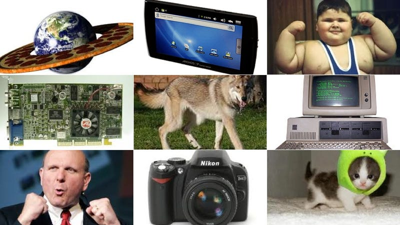 The Most Popular Everything on the Internet