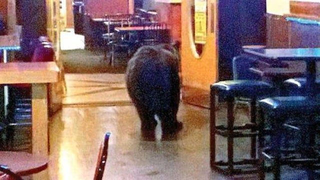Bear Walks Into A Bar, Nobody Notices