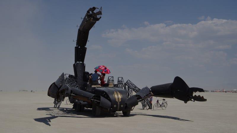 Scorpion Gallery