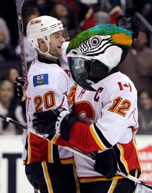 Dammit, Walter The Hockey-Loving Parrot: This Is All Your Fault
