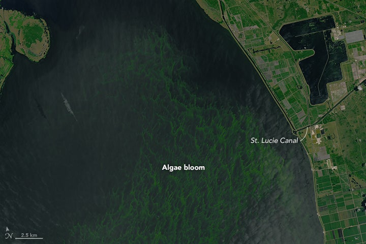 Florida's Disgusting Algae Bloom Is Now Visible From Space