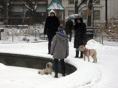 Here, Maybe These Pictures of Snowy New York Will Cool You Down